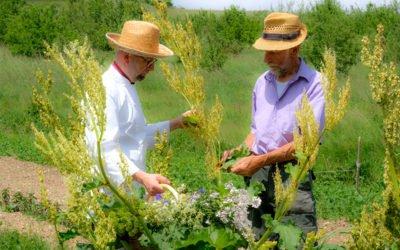 Lo chef Riccardo Cunico e l'erborista Antonio Cantele: a tavola con le erbe di montagna